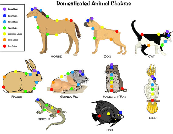 animaux chakras