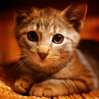 cat orange.jpg