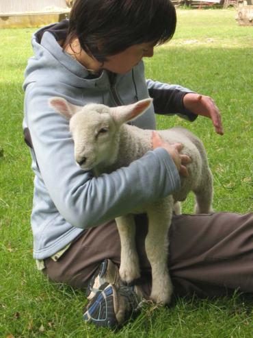 Healing-Lamb
